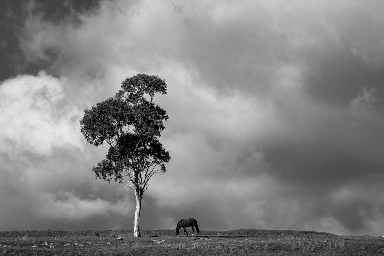 Lonely horse grazing under the tree